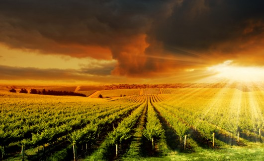 Amazing Vineyard Sunset Adelaide