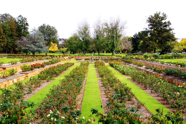 Formal Rose Garden - Veale Gardens, Adelaide, Australia