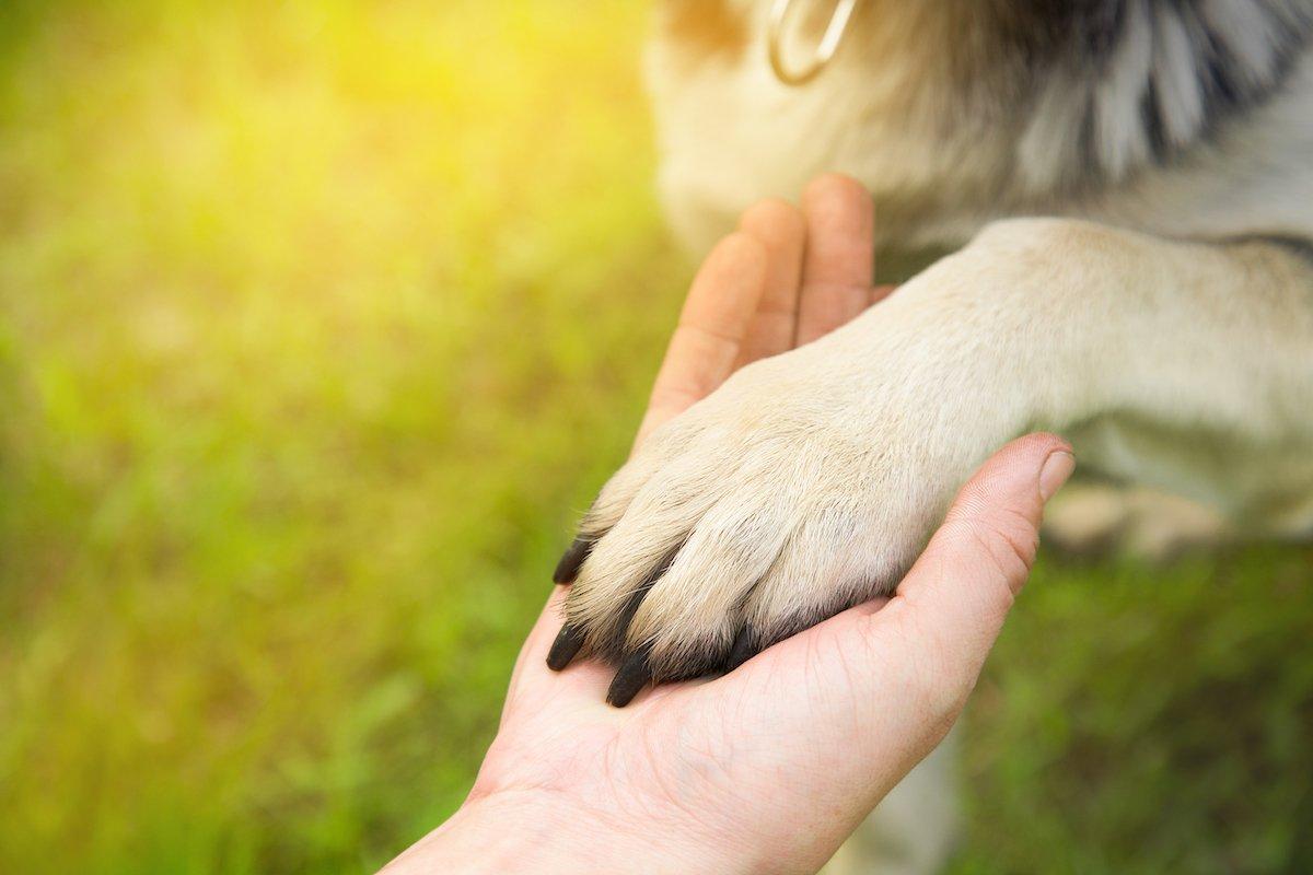 pet trusts in australian estate planning